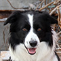 Team Uwe mit Border Collie Aik