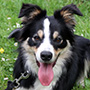 Team Elke mit Border Collie Doreen